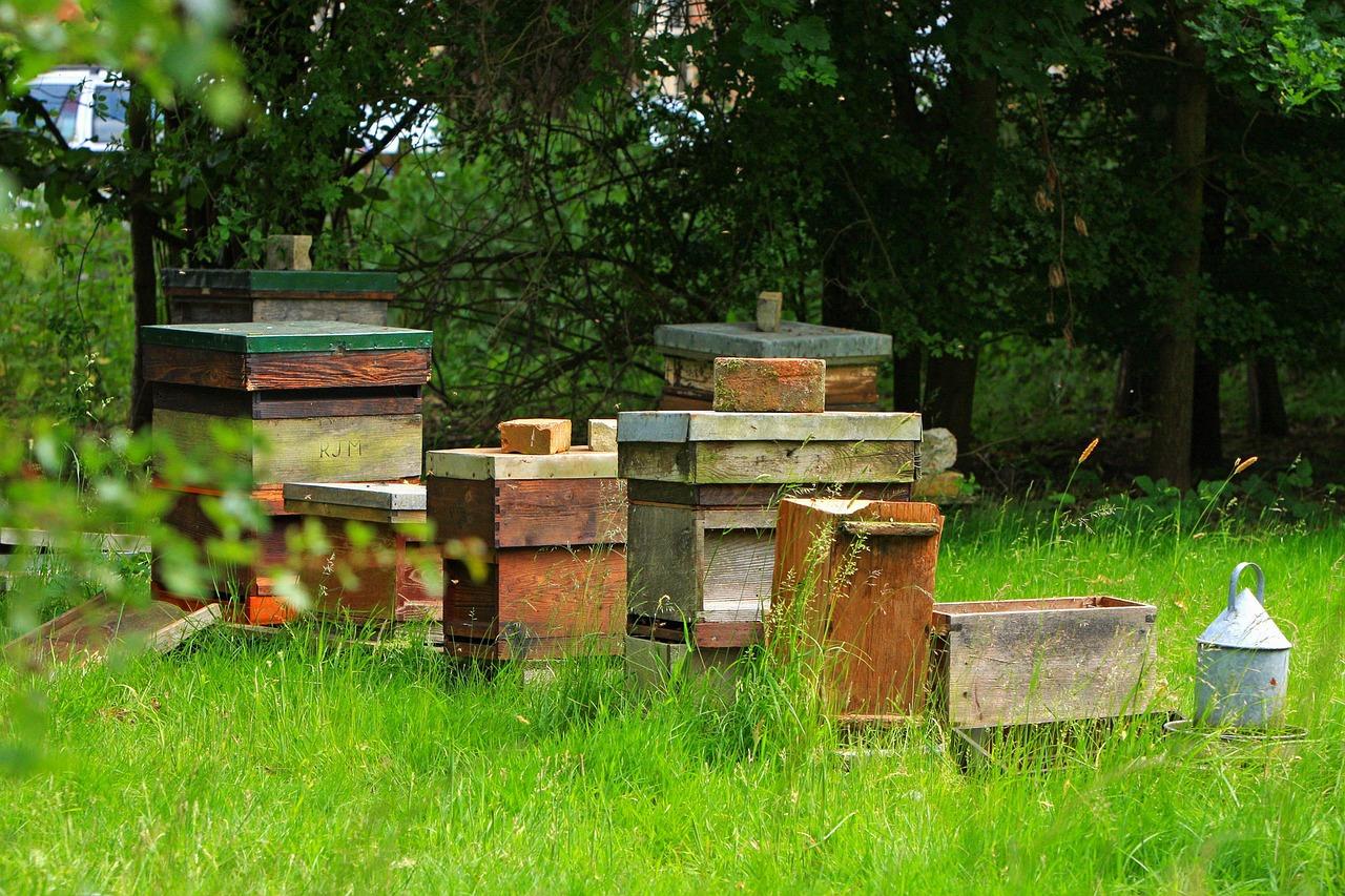 Imker in meiner Nähe - Bienenbeuten im Garten