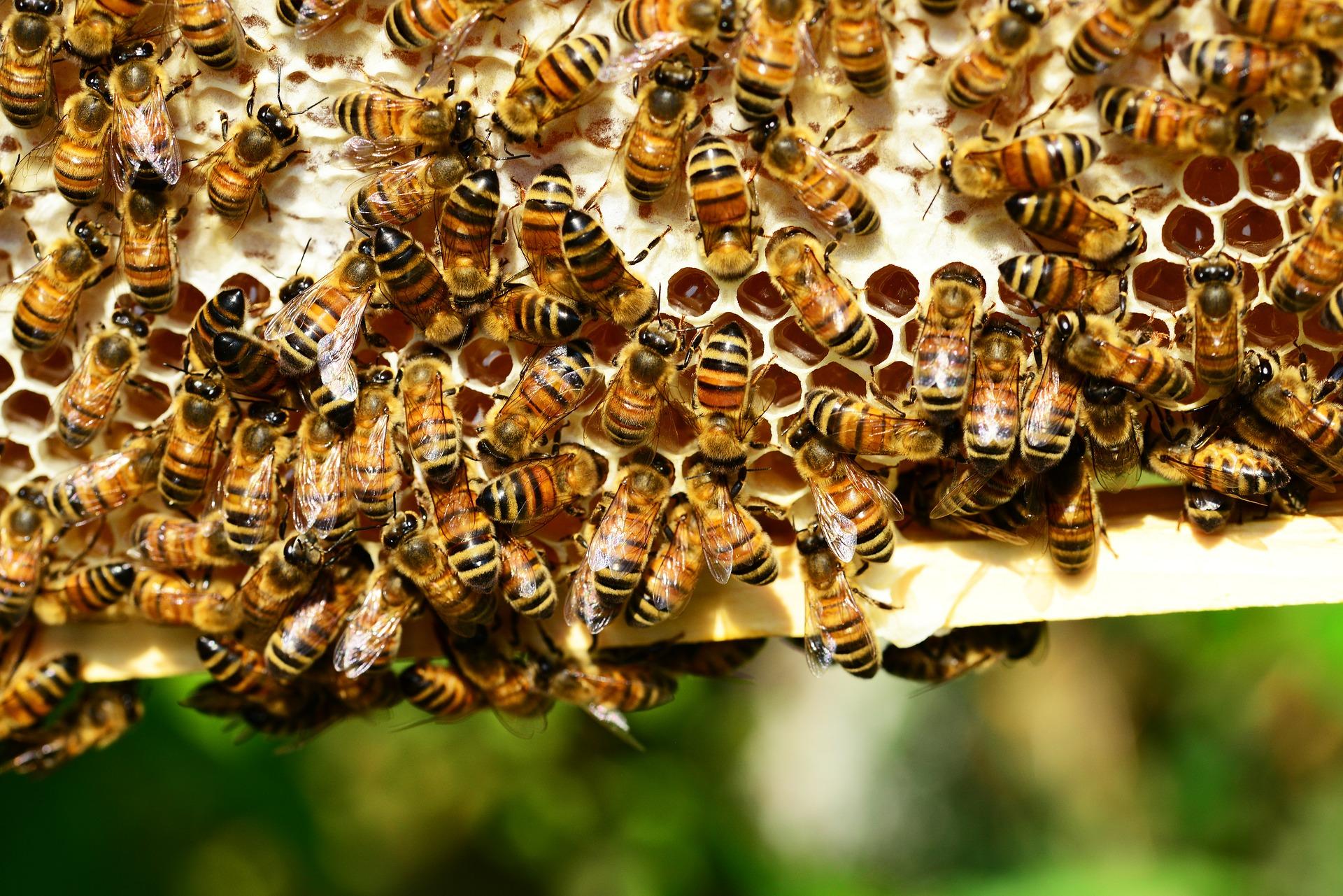 Bienen hängen an einer Honigwabe - Aktuelles aus dem Vereinsleben